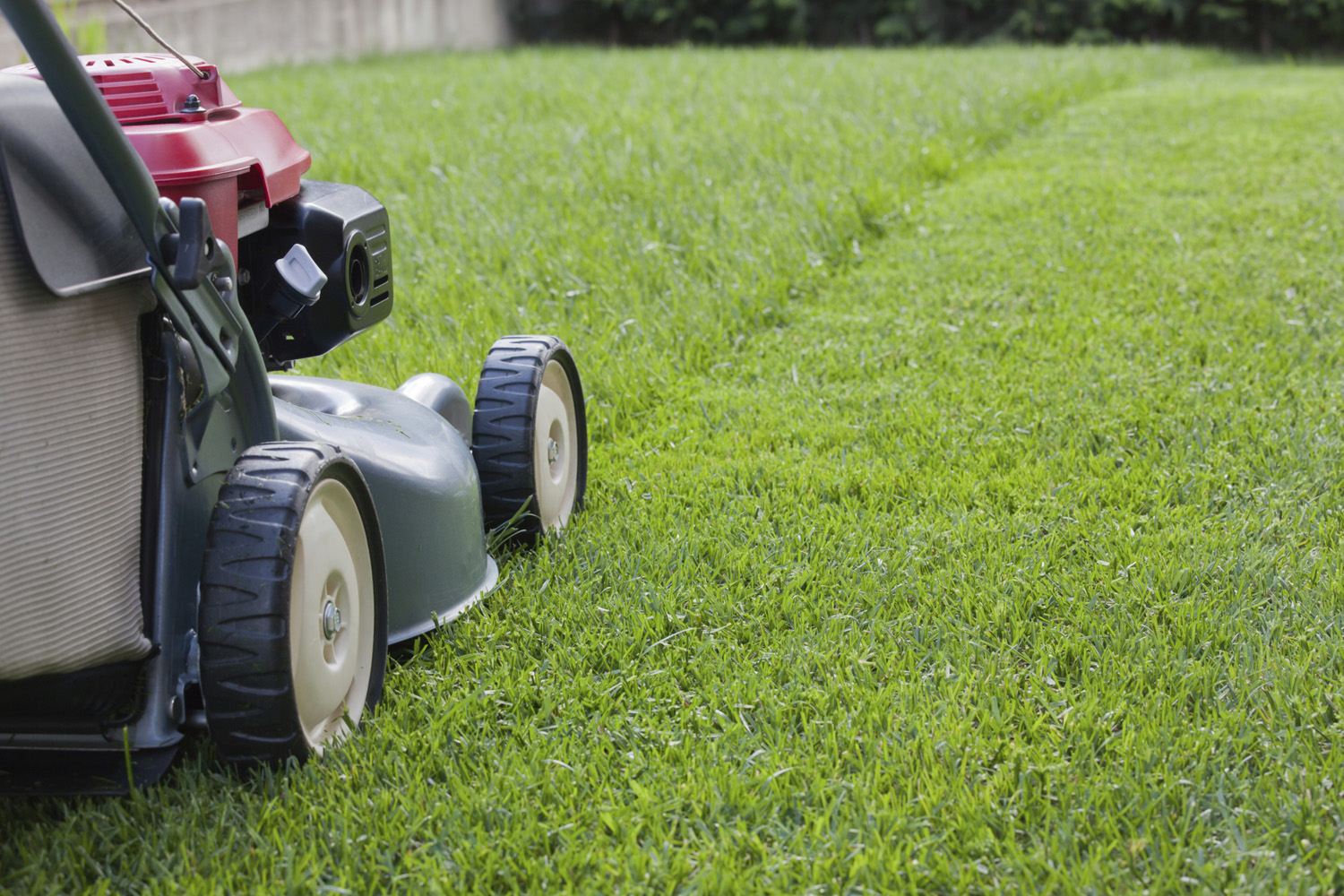 Super bowl groundskeepers share lawn care tips american for Garden maintenance tips