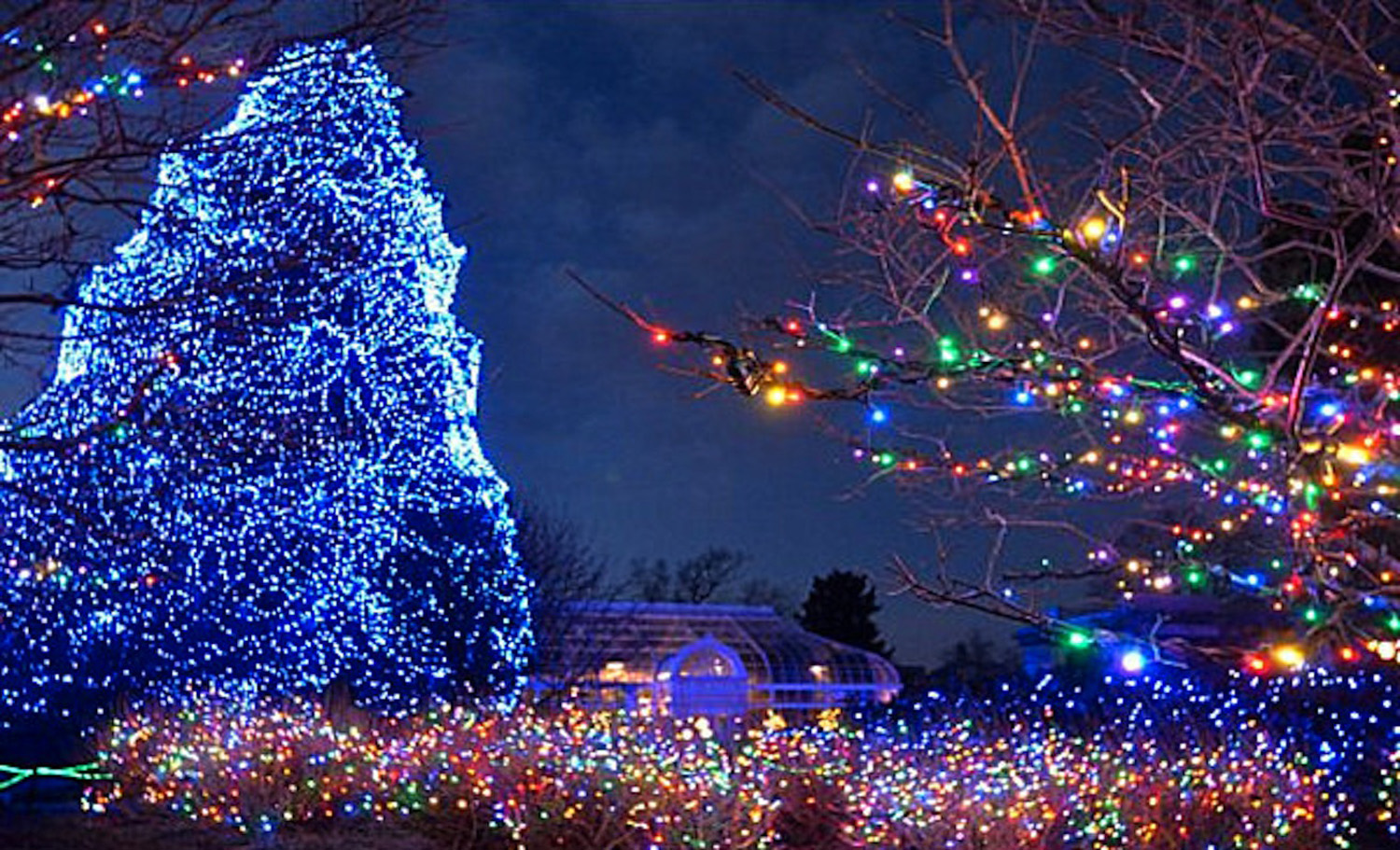 Toledo-Zoo-christmas-tree